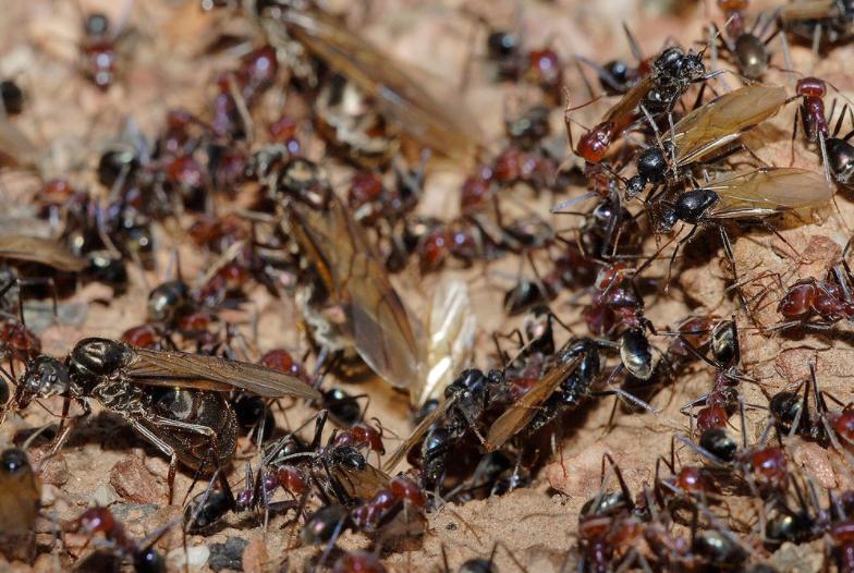 Grupo de hormigas - Wiki Animales