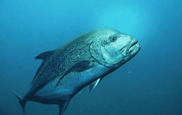 Serviola en aguas profundas - Wiki Animales