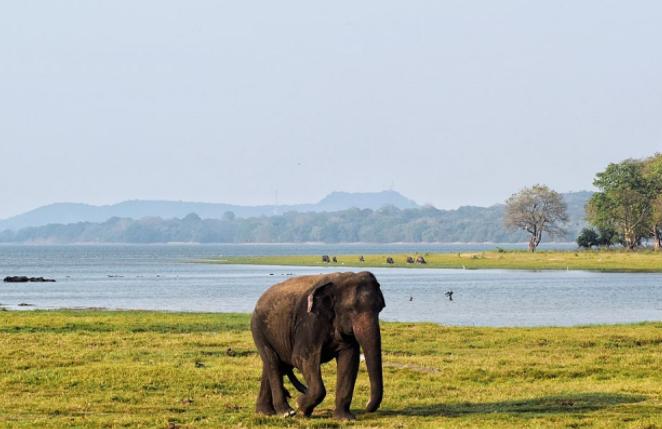 Elefante Asiático en un lago - Wiki Animales